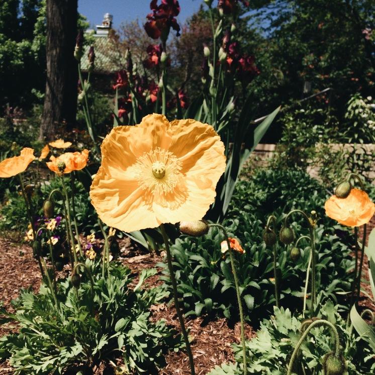 A morning at the Denver Botanical Gardens