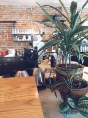House plants in a coffee shop - Genuis
