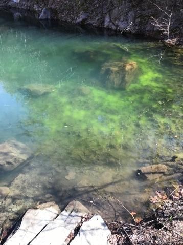 Moss filled lake