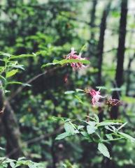 Blooming azeleas