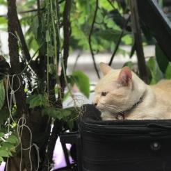 City cats
