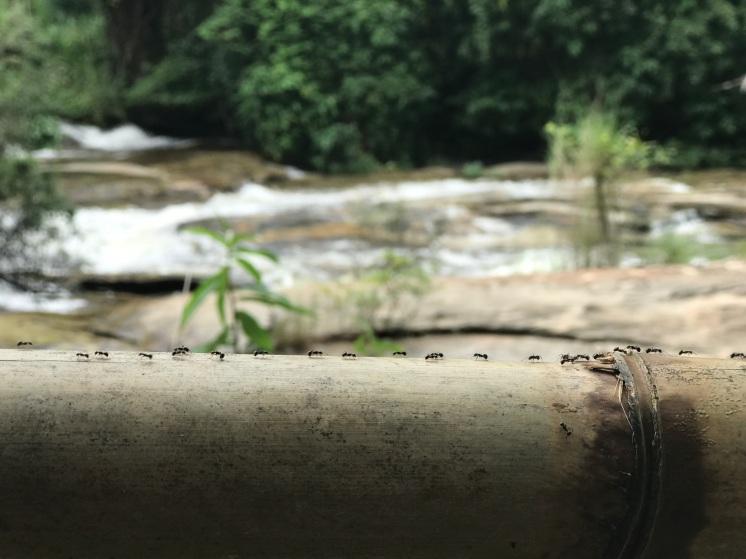 Ants on a log