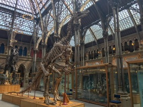 Oxford University Natural History Museum
